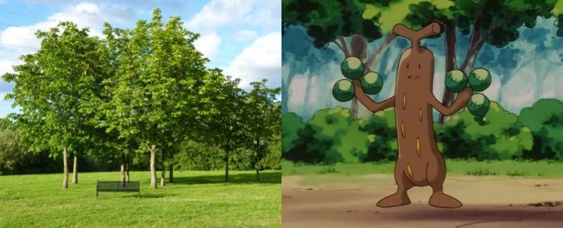 14 Tree-Sudowoodo