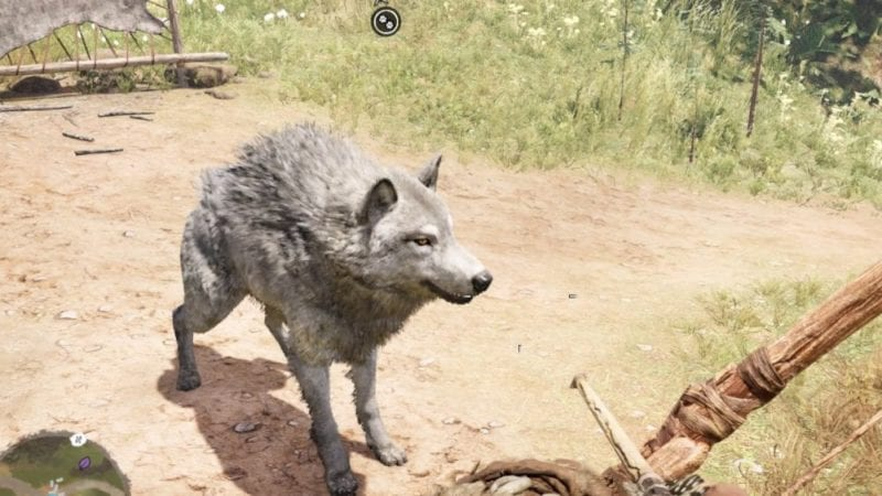 far cry primal how to tame rare white wolf