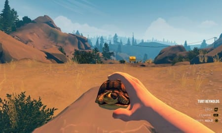Firewatch, turtle, how to get, pet
