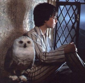 harry potter hogwarts hedwig window