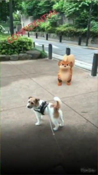 pokemon go field test 1