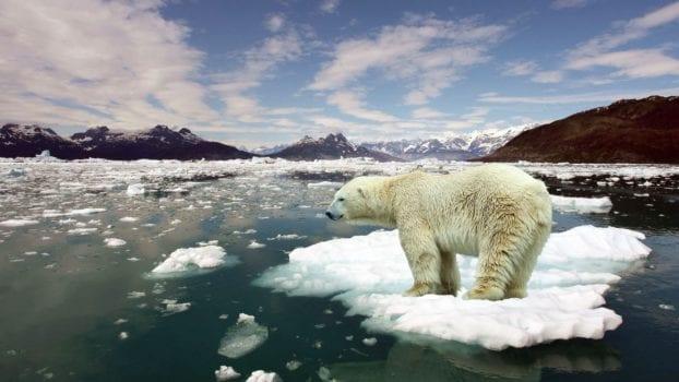 Polar Ice Caps - Articuno
