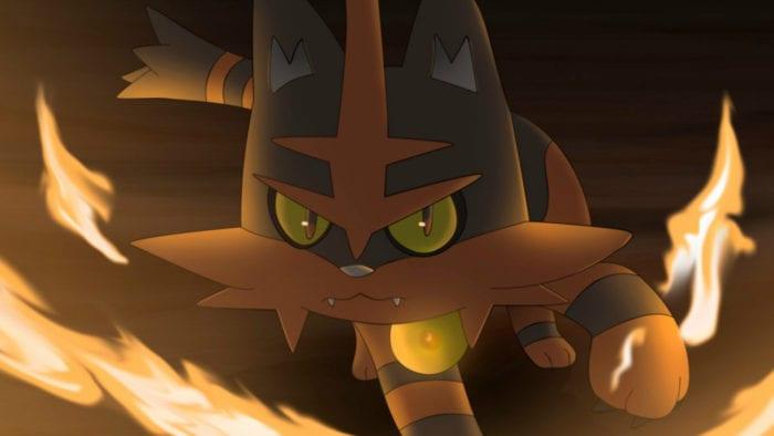 torrocat