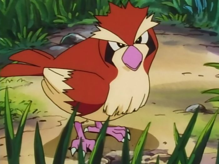 pidgey, bird, starter, pokemon