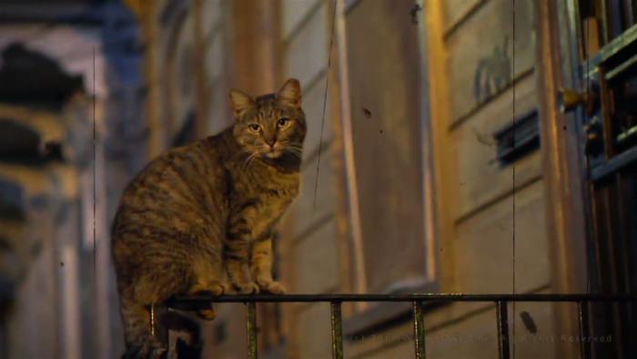 catlife