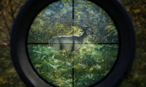 theHunter: Call of the Wild, Xbox One, PlayStation 4