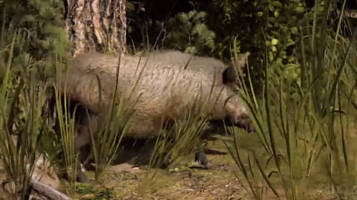 far cry 5 animals ranked