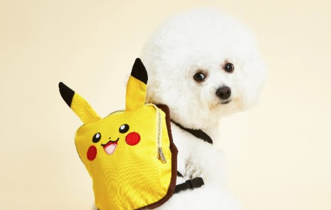 pokemon clothing line for dogs