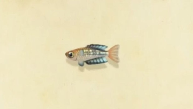 rainbowfish animal crossing new horizons